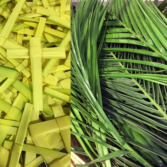 On Palm Sunday: Hey Jesus, won't you fight for me?