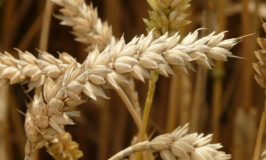 Words, Wonder, Wheat, and Resurrection